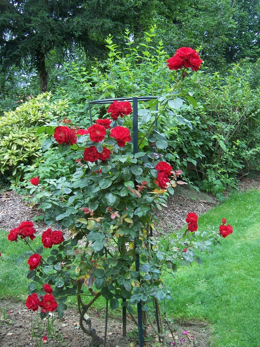 135-rosier-messire-delbard