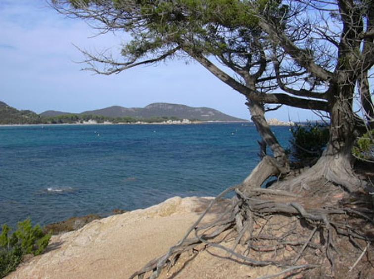 arbre_bord_de_mer