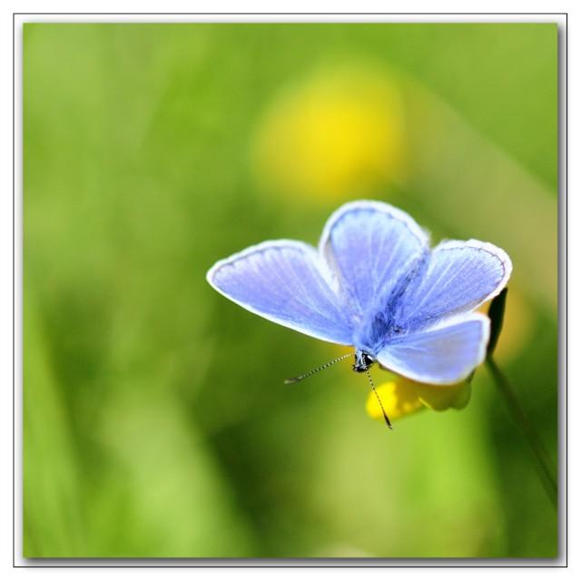 beaute bleue