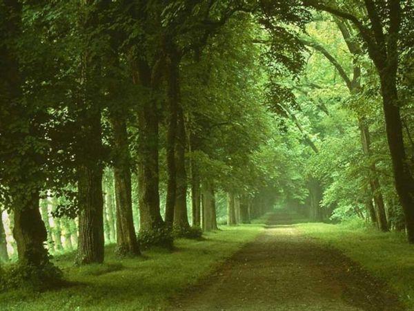 fond-ecran-chemin-au-milieu-des-arbres