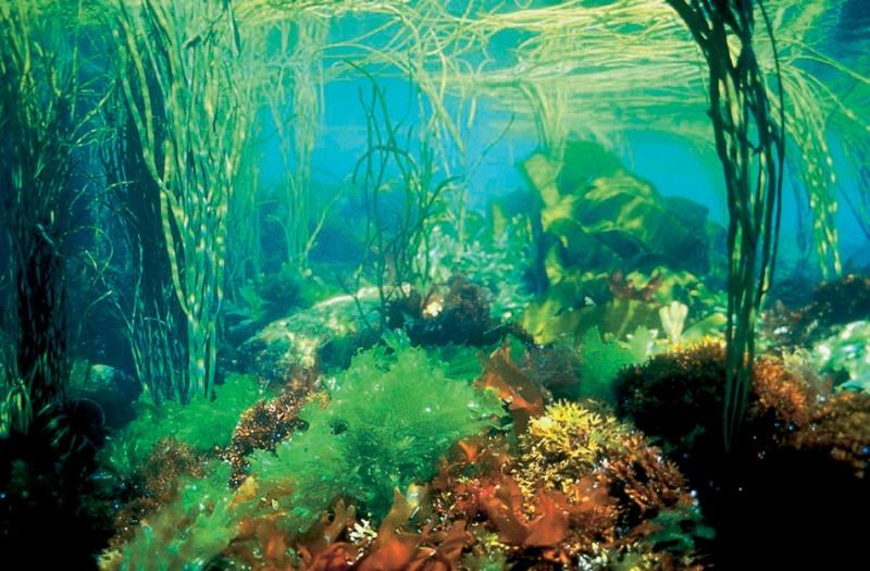 fonds sous marins-l