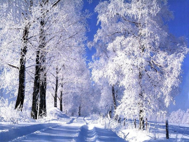 foret-sous-la-neige