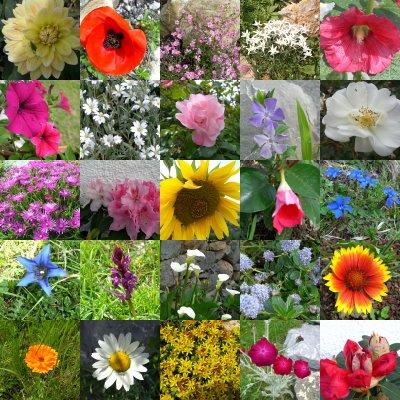 histoire_des_fleurs