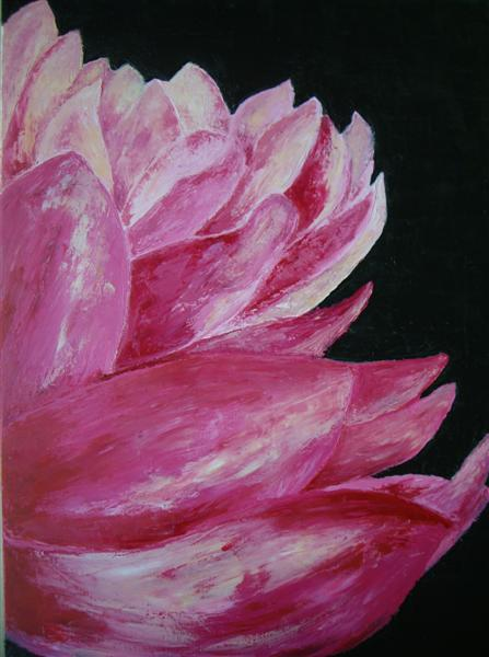 Lotus rose-paix
