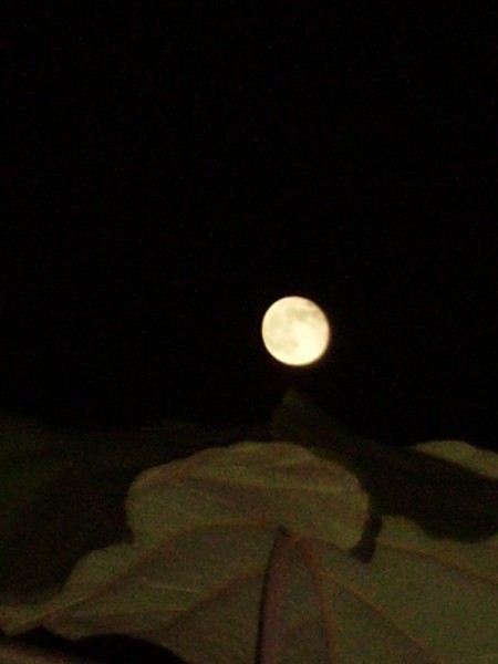 lune2_17.11.051