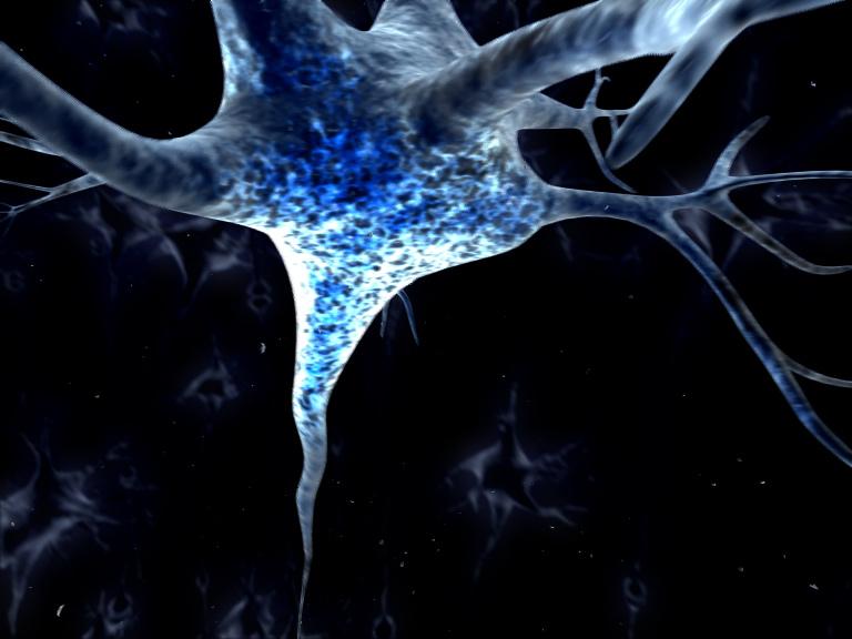 10. Nociceptive neurone