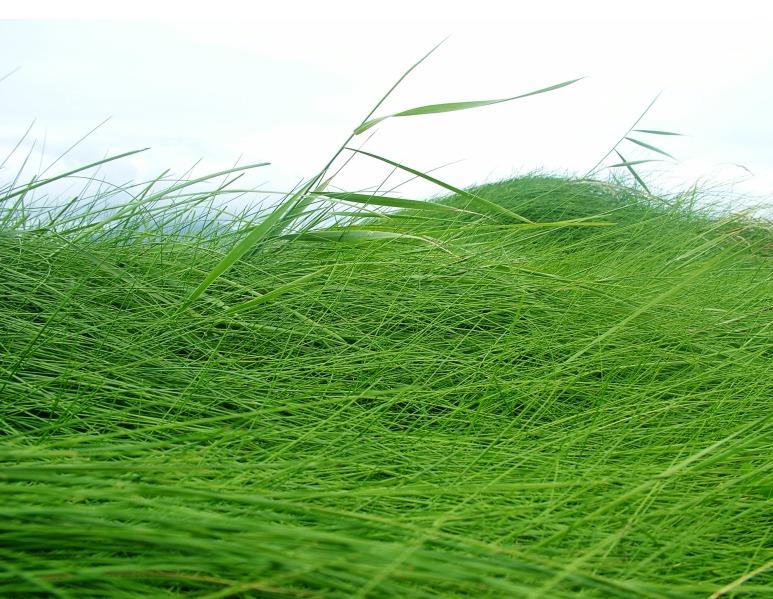 en_herbe