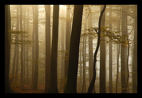 foret_1