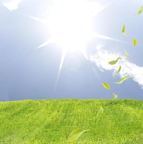 Herbe verte et feuilles