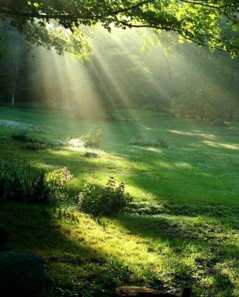 nature-soleil-vert