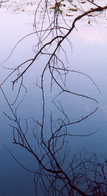 reflet