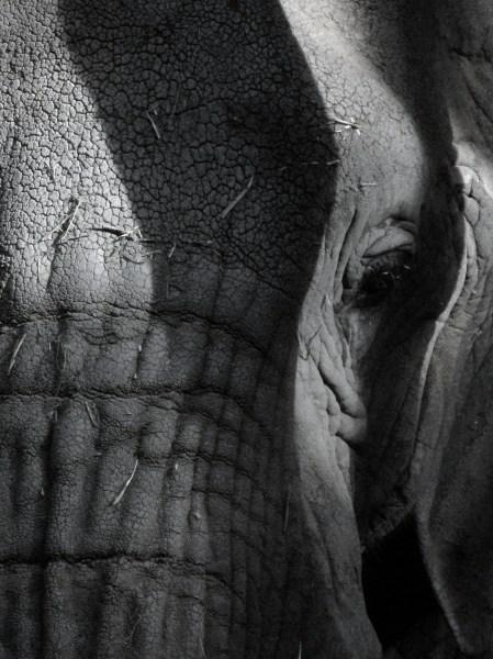 regard_elephant_