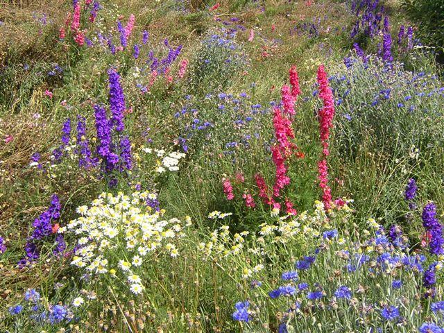 4F1226_fleur_printemps