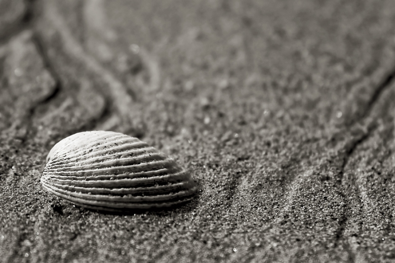 coquille vide