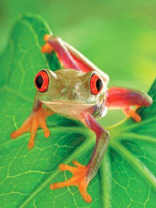 flach-tim-grenouille-2203114
