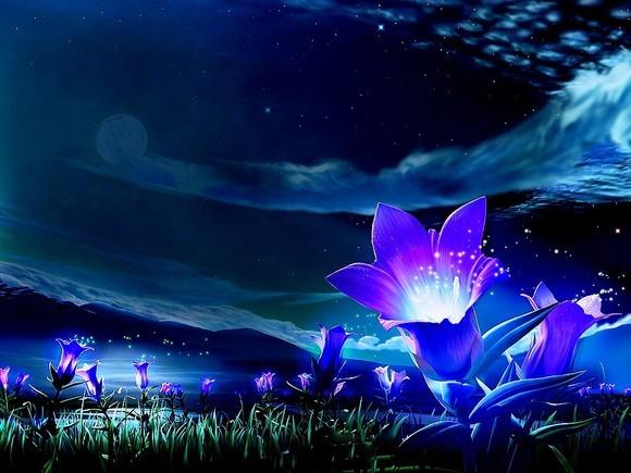 fleur_nuit