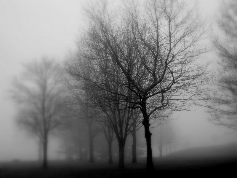 greyday