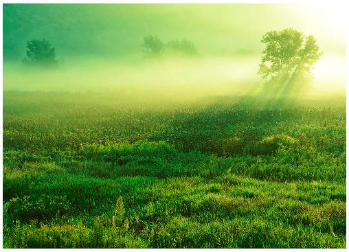herbei