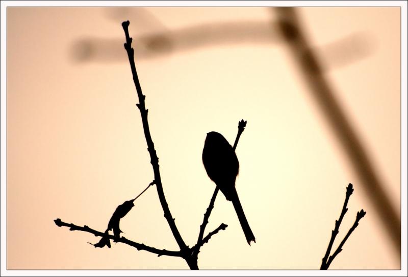 orig_oiseau