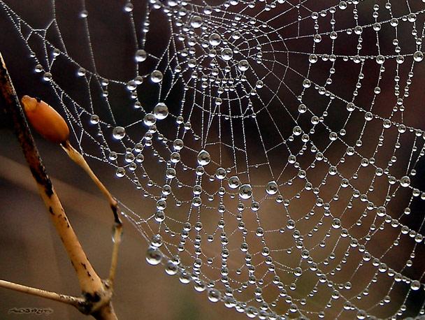 toile-araignee-perles-rosee_5600