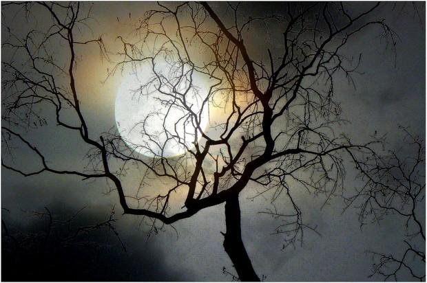 lune_arbre