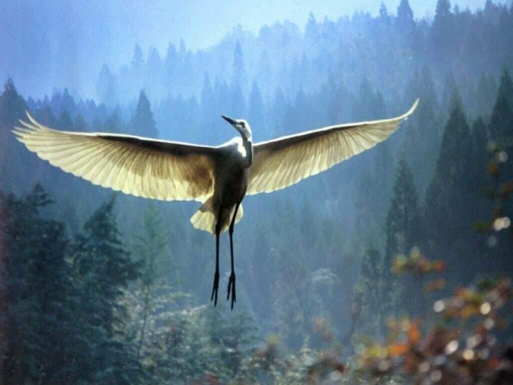 oiseau dans PHILOSOPHIE