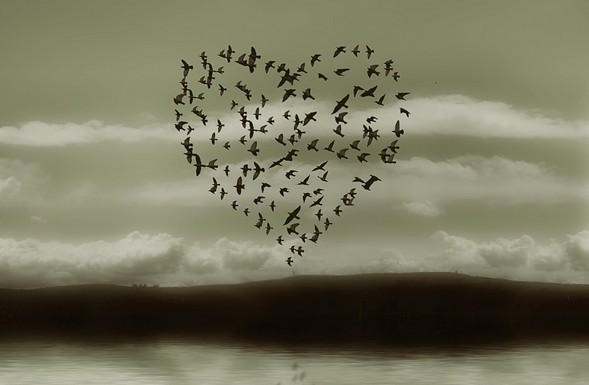 oiseaux-coeur