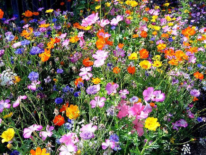 guide eclair des fleurs sauvages