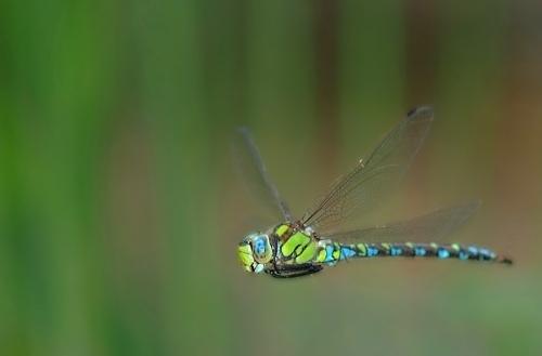 Libellule arbrealettres - Photo de libellule a imprimer ...