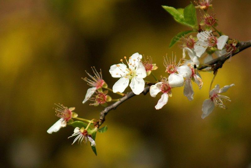 A Chaque Fleur Qui S Ouvre Ransetsu Arbrealettres