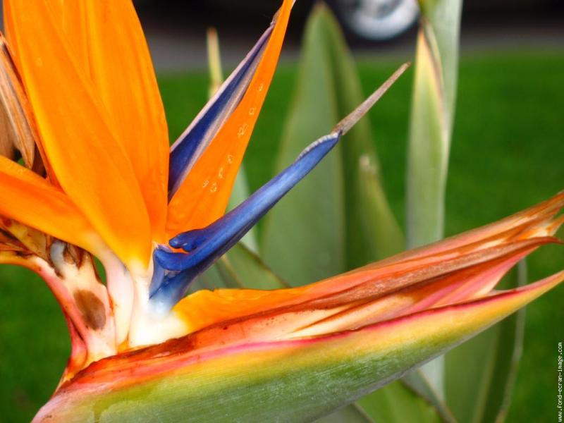 Avenir d oiseau guillevic arbrealettres for Plante oiseau de paradis