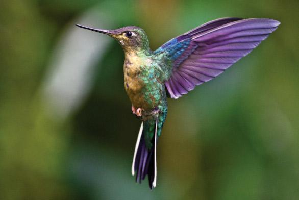 Pourquoi oiseau mouche jacques pr vert arbrealettres - Pourquoi les mouches piquent ...