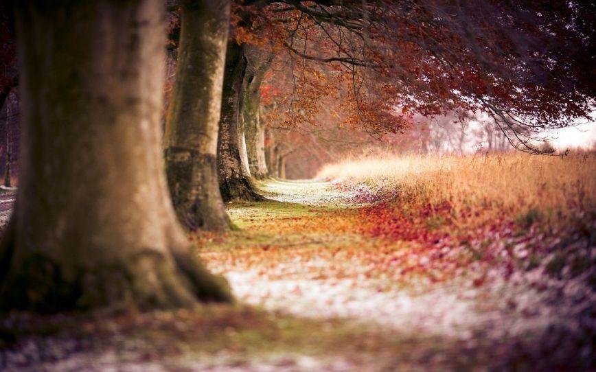 Automne-feuille-dérable-rouge-forêt