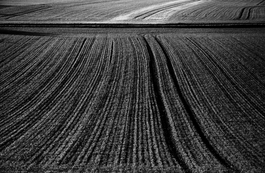 blé d'hiver