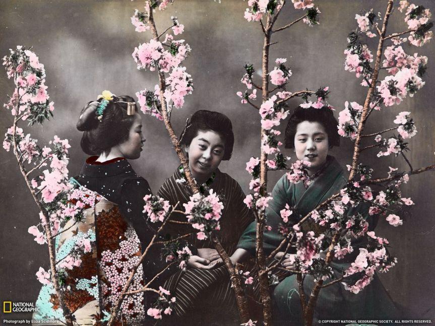 femmes cerisier blanc