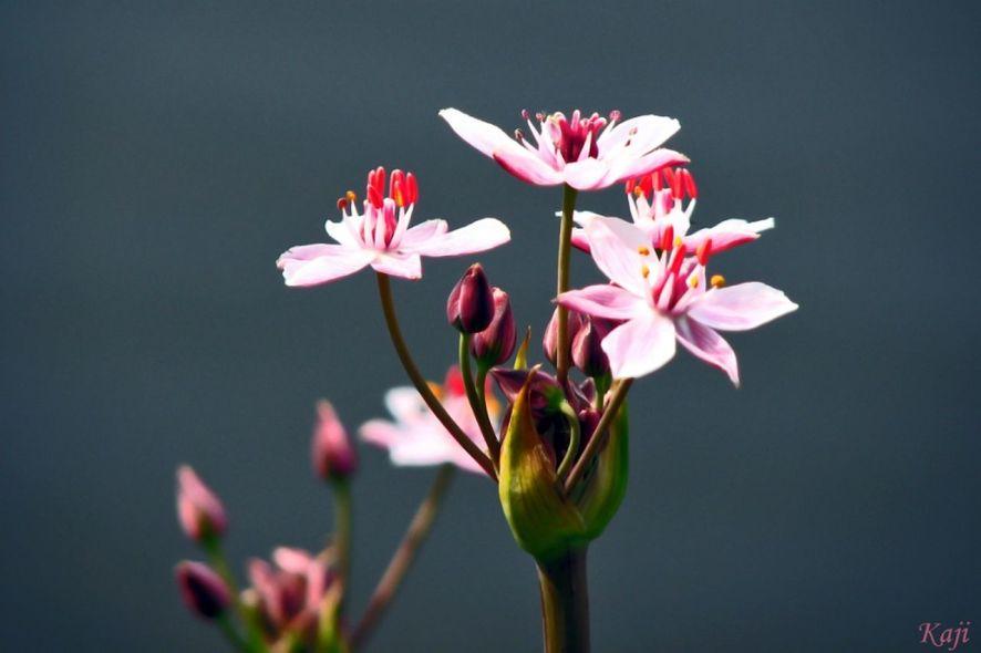 fleurs rivage