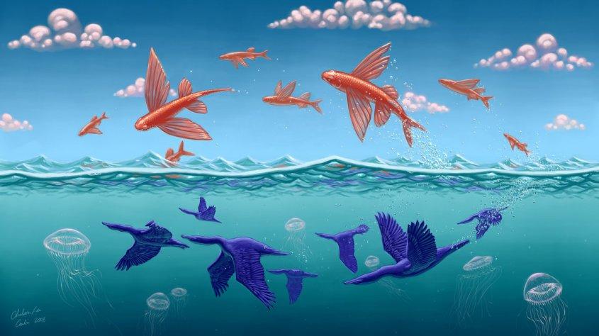 cacodaemonia  poissons volantsw