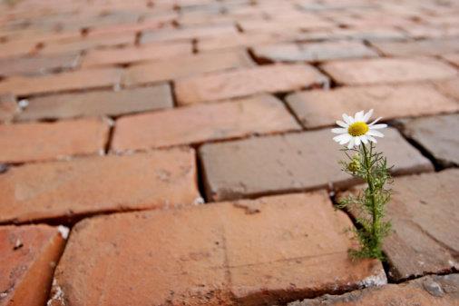 fleur pierres