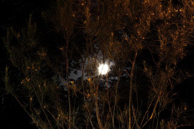 lune toile d'araignée _z