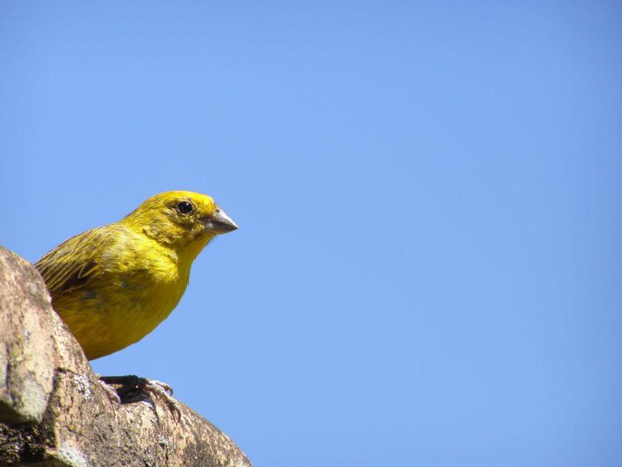 Oiseau d'Argentine