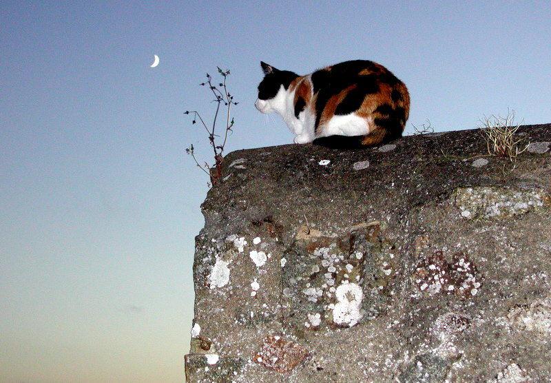 chat  l