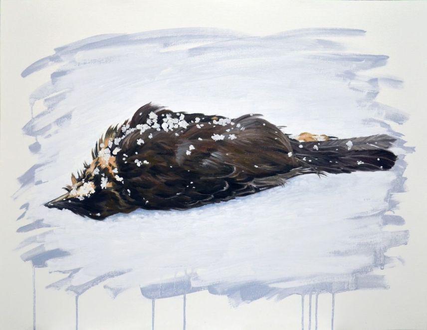 Mathieu Triolet Oiseau mort sur la neige (2013)