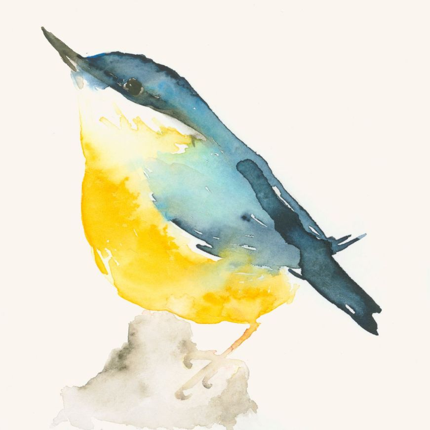 oiseau jaune et bleu