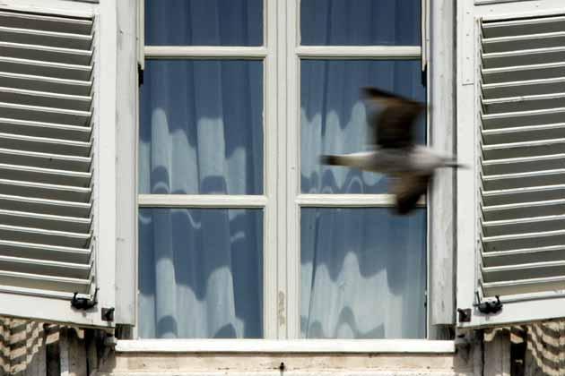 oiseau-fenetre