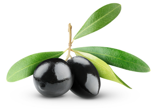 Two black olives on branch with leaves isolated on white