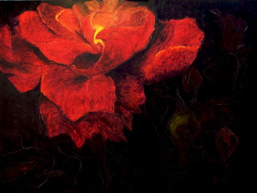 rose [1280x768]