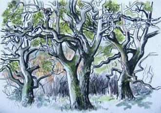 Carry Akroyd oaks (Centre)