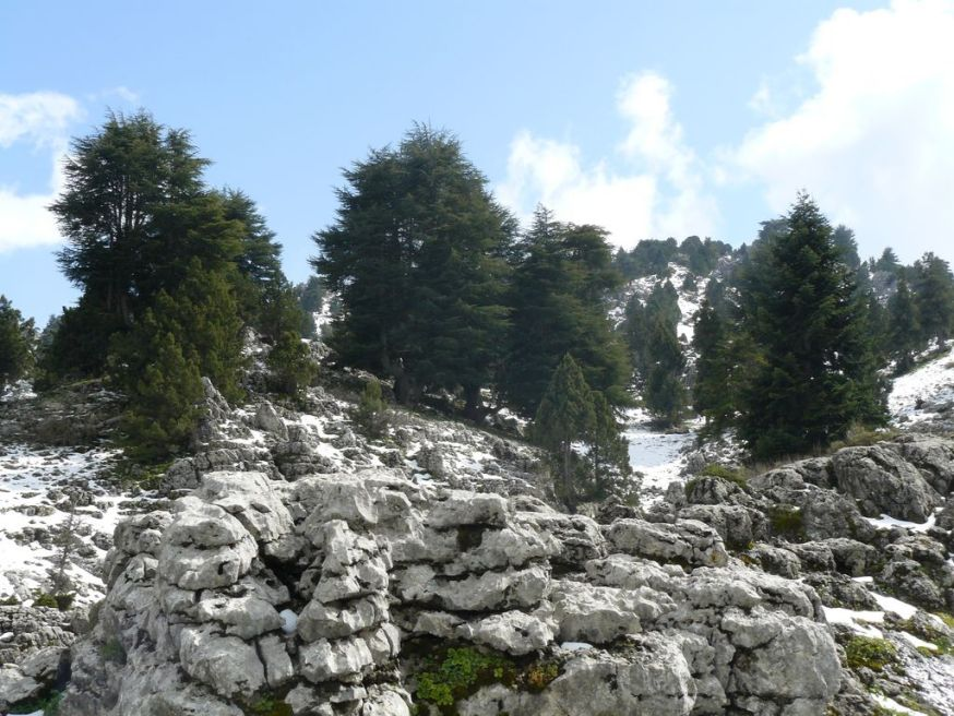 Karst_and_Cedars [1280x768]