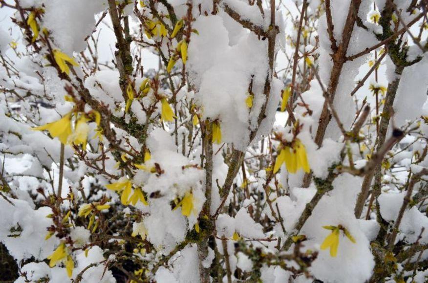neige  [1280x768]