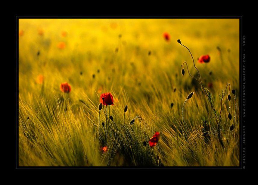 printemps_xavier_jamonet_ecrins_de_lumiere [1280x768]